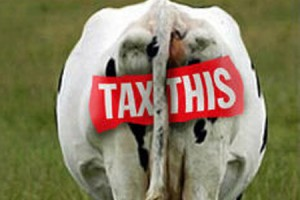 Tax This Cow